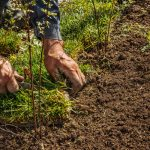 How to Landscape Without Experiencing Orthopedic Injury